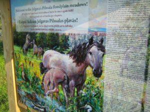 Jelgava - zirgi